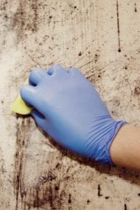 mold-removal-western-mass